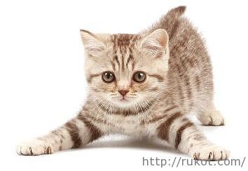 tučné čierne holky mačička pics